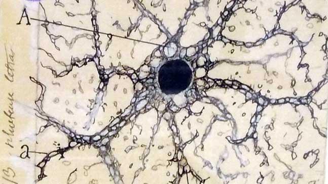 Dibujo de Ramón y Cajal. Conexiones neuronales.